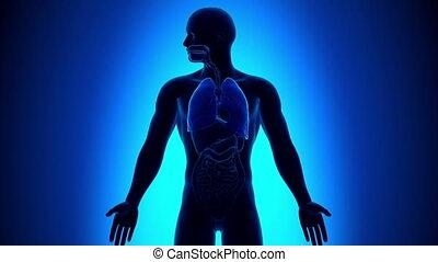 bronchiolitis, zapalenie, -