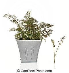 Bronze Fennel Herb - Bronze fennel herb in a distressed...
