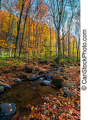 brook among stones and foliage in forest. beautiful autumn...