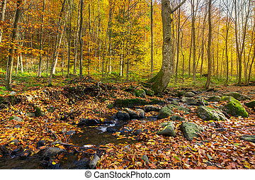 brook among the trees. fallen foliage among the rocks....