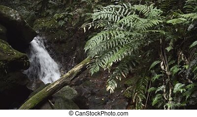 Brook and fern - Narrow fast brook flowing on rock in back...