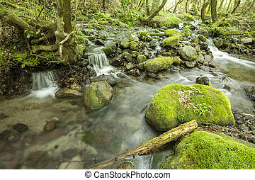 Brook and mossy stone - Small brook falling down a small ...