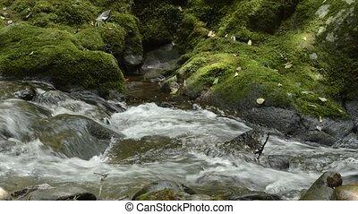 Brook beside mossy rock - Thin narrow brook flowing beside...
