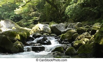 Brook flowing among stones - Flowing brook descends through...