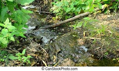 Brook flowing through rapids in summer