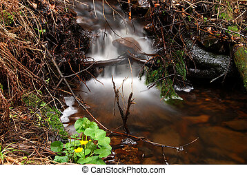 Brook - Forest brook with long exposure and yellow flower