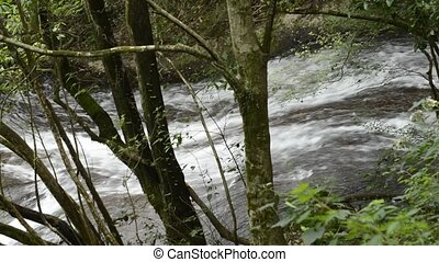 Brook from among trees - Brook flowing over rock slope view...