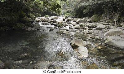 Brook gently flowing