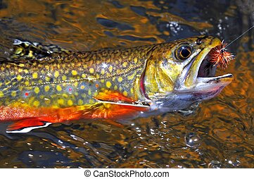 Beautiful brook trout caught on a fly