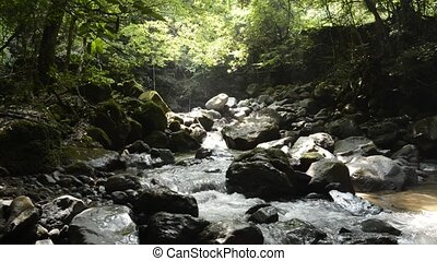 Brook under forest - Narrow brook flowing through among...
