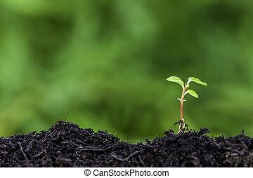 brotar, novo, seedling, chão