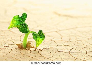 brotar, planta, deserto