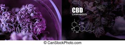brotes, thc, collage, fotos, elementos, cbd, close-up., marijuana