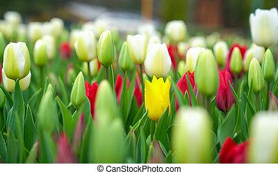 brotes, uno, rosa, concept., foco, permisos amarillos, verde...