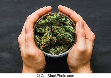 brotos, cima., legalizing, marijuana., weed., mãos, cannabis, fresco, lote, conceitos, fim, vista., topo, man.
