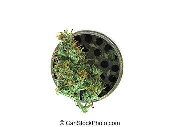 brotos, cinzento, moedor, marijuana, isolado, metálico, cannabis, fundo, branca, erva daninha