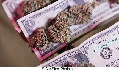 brotos, close-up., dólares, contas, marijuana