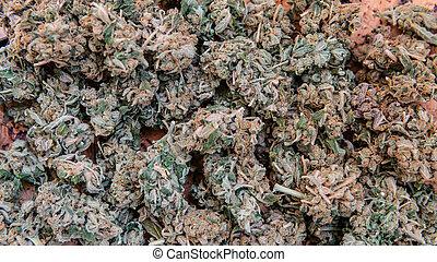 brotos, controle, macho, verificar, mão., marijuana, américa, qualidade, médico