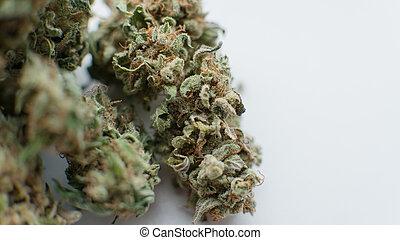 brotos, flor, marijuana, cima, experiência., fim, branca