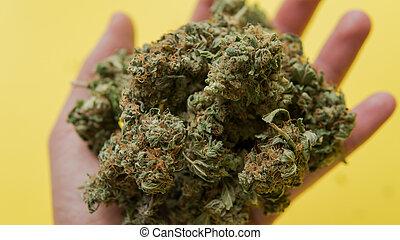 brotos, grande, marijuana, amarela, mão, fundo, macho