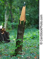 brotos, lápis, tronco árvore