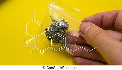 brotos, médico, cima, marijuana, grande, cannabis, fresco, cultivar, conceitos, fim, colheita, crescer, hands.