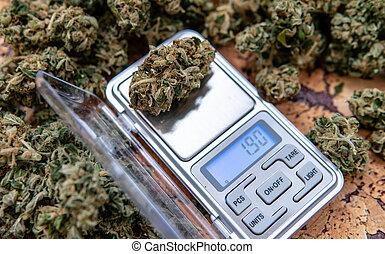 brotos, pesando, marijuana, cannabis, fresco, scale., colheita