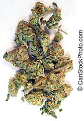 brotos, planta, natural, cannibis, marijuana, quebrada, verde, flores