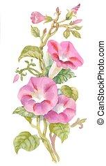 brotos, verão, jardim, erva obrigatória daninha, aquarela, flowers., florescer