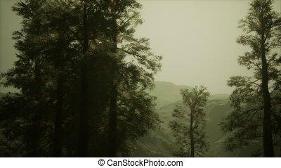 brouillard, accidenté, arbres, pin, venir, flanc montagne, ...
