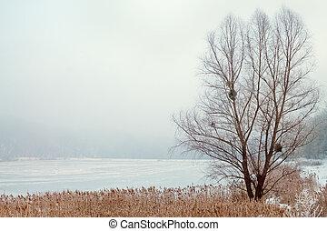 brouillard, arbre