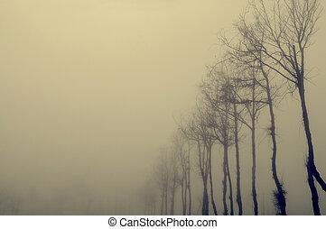 brouillard, arbre, séché