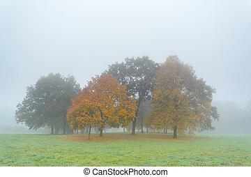 brouillard, arbres automne