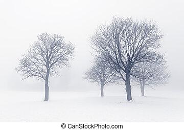brouillard, arbres hiver