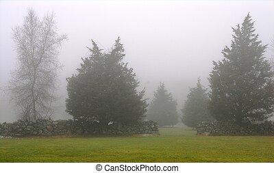 brouillard, arbres