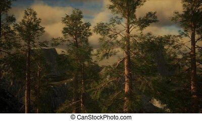 brouillard, arbres, orage, pin, flanc montagne, accidenté, ...