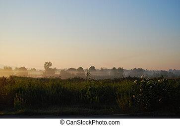 brouillard, dans, rayons, de, a, soleil levant, au-dessus, a, champ, à, a, bord route