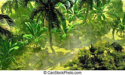 brouillard, exotique, rainforest, matin, dense