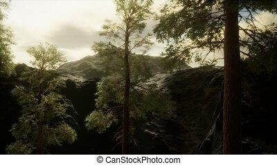 brouillard, flanc montagne, venir, accidenté, orage, arbres ...
