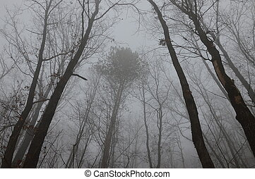 brouillard, forêt, arbres