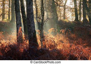 brouillard, forêt, levers de soleil