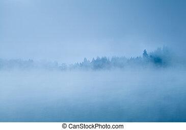 brouillard, forêt, matin