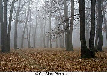 brouillard, forêt