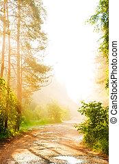 brouillard, forêt, route