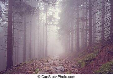 brouillard, hanté, forêt