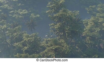 brouillard, jungle, couvert, rainforest, paysage