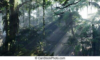 brouillard, jungle, rainforest, brumeux