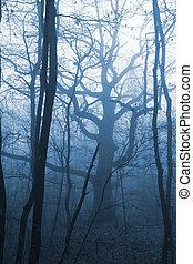 brouillard, lumière froide, sombre, forêt