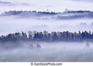 brouillard, matin