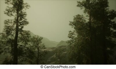 brouillard, orage, accidenté, pin, venir, flanc montagne, ...